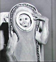 COL Ivan Bananapants